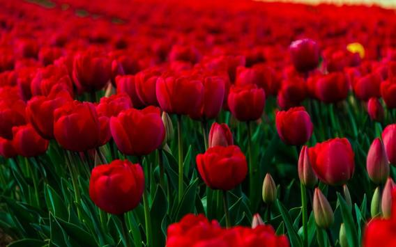 Best Flowers Wallpapers apk screenshot