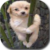Hilarious Dancing Dogs icon