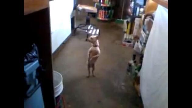 Hilarious Dancing Dogs screenshot 3