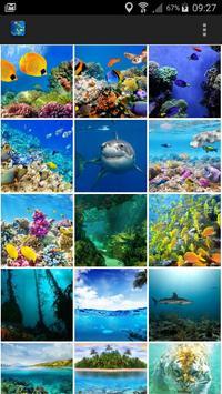 Underwater World Wallpaper poster