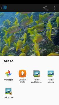 Underwater World Wallpaper apk screenshot