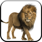 New HD Lion Wallpapers icon