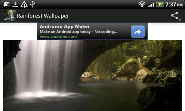 Aussie Rainforest Wallpaper screenshot 1