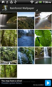 Aussie Rainforest Wallpaper screenshot 3