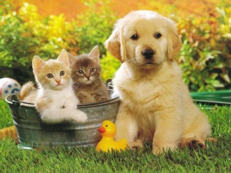 ... Cute Puppies HD Wallpapers apk screenshot ...