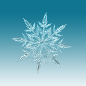 Snow Wallpaper icon
