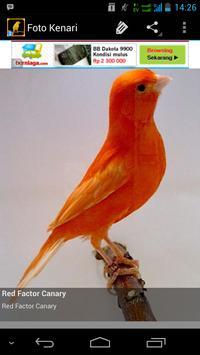 Burung Kenari V2 apk screenshot