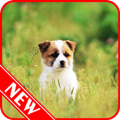 Puppy Wallpaper icon