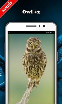 Owl Wallpaper screenshot 2