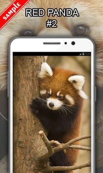 Red Panda Wallpapers apk screenshot