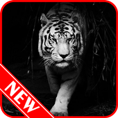 White Tiger Wallpaper icon