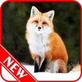 Fox Wallpaper icon