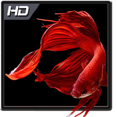 Betta Fish Wallpaper HD Pack icon