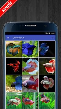Betta Fish Wallpaper HD Pack screenshot 3