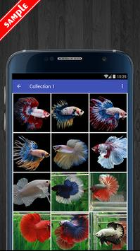 Betta Fish Wallpaper HD Pack screenshot 1