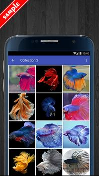 Betta Fish Wallpaper HD Pack apk screenshot