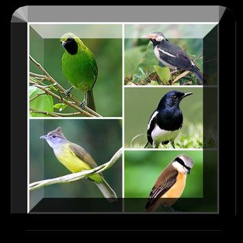Kicau Burung Master poster