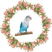 Kicau Lovebird Master icon