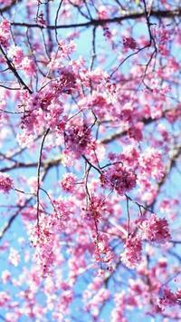 Flowers screenshot 1