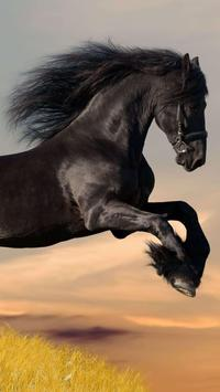 Horse Wallpapers screenshot 11