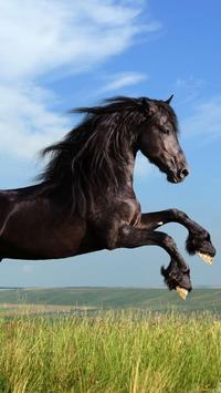 Horse Wallpapers screenshot 7