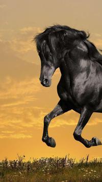 Horse Wallpapers screenshot 6