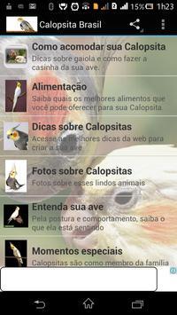Calopsita Brasil poster