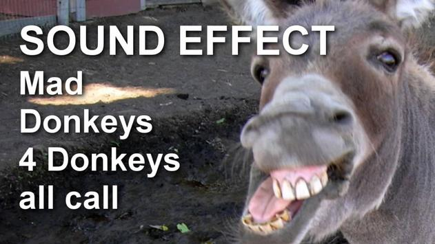 Donkey Sounds Effects poster