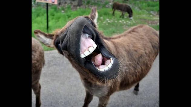 Donkey Sounds Effects apk screenshot