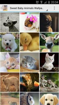 Sweet Baby Animals Wallpapers poster