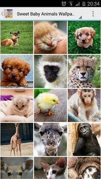 Sweet Baby Animals Wallpapers apk screenshot