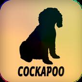 Cockapoo icon