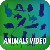 Animals Video icon
