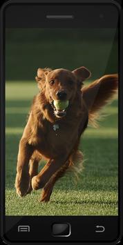 Dog Training poster