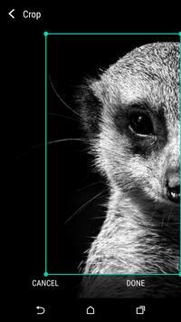 Animal Wallpaper Black & White apk screenshot