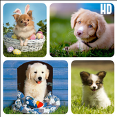 Dog Breed Wallpapers HD icon