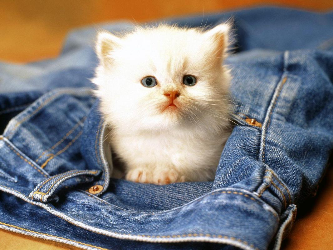 Cute Cats Hd Wallpapers For Android Apk Download