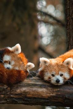 Cute Red Panda screenshot 4