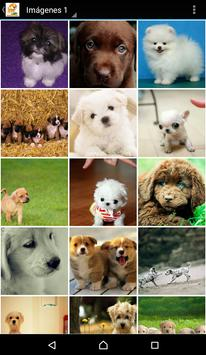 Imagenes De Perritos 4U screenshot 1