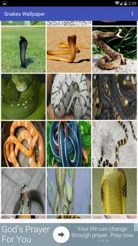 Snakes Wallpaper apk screenshot