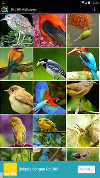 Bird HD Wallpapers poster
