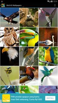 Bird HD Wallpapers apk screenshot