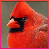 Bird Wallpaper HD icon