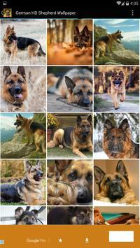 German HD Shepherd Wallpaper poster