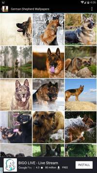 German Shepherd Wallpapers poster