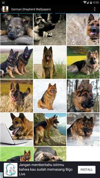 German Shepherd Wallpapers screenshot 1