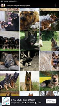 German Shepherd Wallpapers screenshot 2