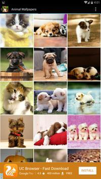 Animal Wallpapers poster