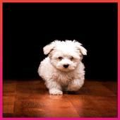 Cute Animal Wallpaper icon