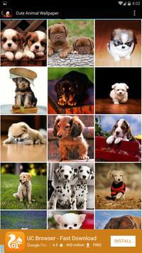 Cute Animal Wallpaper poster